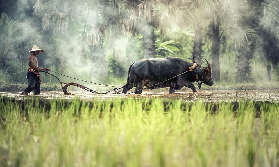 buffalo-1822574_960_720
